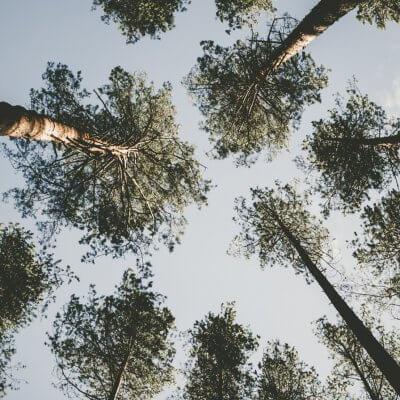 Blick auf Baumkronen