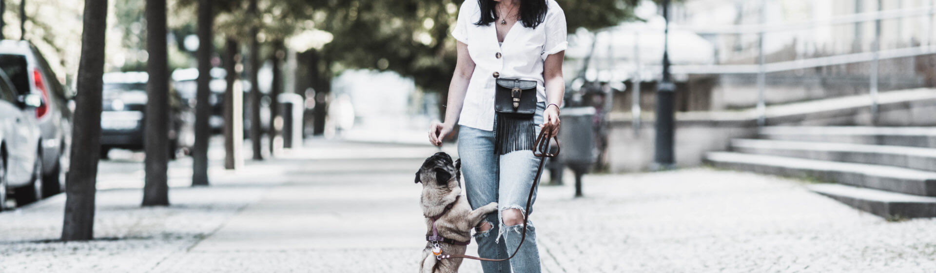 Raus mit dem Hund : praktisch & stylish zur Gassirunde Shoelove Deichmann
